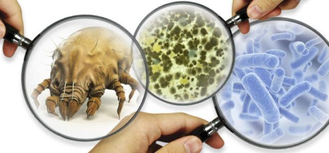 Ácaros, Fungos e Bactérias